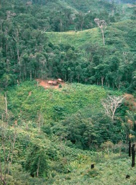 Slash-and-burn tavy clearing near Andapa, Madagascar © 1994 C. Kull