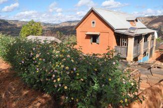 Lantana hedge, solar panel, and satellite dish near Ambositra