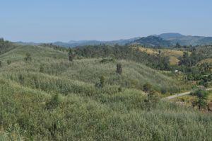 Grevillea-covered hillsides north of Vatomandry