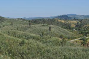 Grevillea-covered hillsides north of Vatomandry